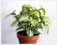 Indoor Plants Nursery in Delhi | Indoor Plants Flower Delhi | Inddor Plants and Flowers - Samadhiya Landscaping