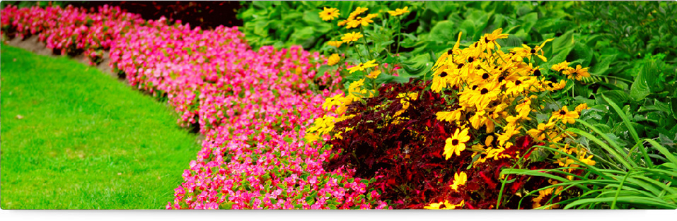 landscaping services in delhi